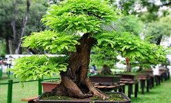 รู้ไว้ใช่ว่า ปลูกต้นไม้ตามทิศ ตามประเพณีความเชื่อแต่โบราณ 4 ทิศหลัก