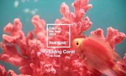 """Living Coral"" หรือสีส้มปะการัง สี Pantone ประจำปี 2019"
