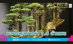 เผยโฉมบอนไซแต่งเลียนแบบป่าสนญี่ปุ่น ที่มีมูลค่าสูงถึง 1.8 ล้านเยน