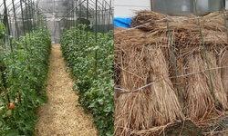 ใช้หญ้าแห้งคลุมดิน ภูมิปัญญาในการเพิ่มผลผลิตทางการเกษตรที่เป็นมิตรต่อสิ่งแวดล้อมของคนญี่ปุ่น
