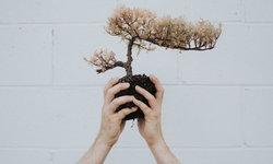 ไม่แปลกที่จะรู้สึกเศร้า เมื่อต้นไม้ที่เราเลี้ยงไว้ ตายลง