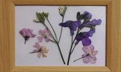ทำดอกไม้ทับแห้งง่าย ๆ โดยใช้ไมโครเวฟตามวิธีของคนญี่ปุ่น