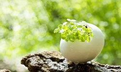 8 วิธีการนำเปลือกไข่มาใช้ประโยชน์ของคนญี่ปุ่น