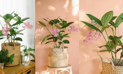 4 พรรณไม้ดอกสีชมพูสวย เพิ่มชีวิตชีวาให้บ้านรื่นรมย์