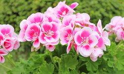 ไล่แมลงในสวนด้วย 4 พันธุ์ไม้ช่วยบดบังกลิ่นอาหารของศัตรูพืช