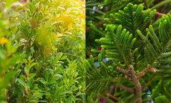 7 พันธฺุ์ไม้ประโยชน์เหลือเชื่อ ทั้งจับฝุ่นเก่ง สวยงามประดับบ้านเลิศ