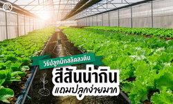 4 ขั้นตอน วิธีปลูกผักสลัดลงดิน สีสันน่ากินแถมปลูกง่ายมาก