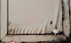 ชื้นจนเห็ดขึ้น! วิธีแก้ปัญหาห้องน้ำชื้น ไม่มีหน้าต่าง ตัดปัญหาทั้งเชื้อรา และกลิ่นอับ