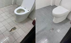 สาวโพสต์ปูพื้นห้องน้ำใหม่ด้วยตัวเอง ประหยัดตามยุคโควิด ดูไฉไล ไม่เสี่ยงพยาธิ