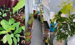 มือใหม่อย่าท้อ สาวโพสต์เปลี่ยนระเบียงคอนโดเป็นสวนผัก ได้ผักกินเองอย่างภูมิใจ