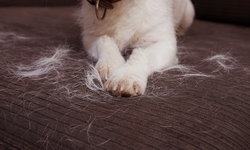 วิธีลดปัญหาขนสัตว์ในบ้าน ควบคุมอย่างไรไม่ให้เหนื่อยทำความสะอาด