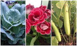 เปิดบ้านพาชมดอกไม้ และผักสวนครัว