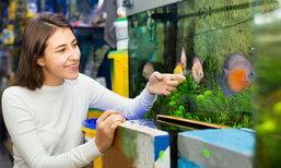 6 วิธีจัดตู้ปลาให้ถูกหลักฮวงจุ้ย