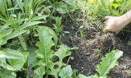 5 วิธีกำจัดวัชพืชด้วยวิธีธรรมชาติ ปลอดภัย ไร้สารเคมี