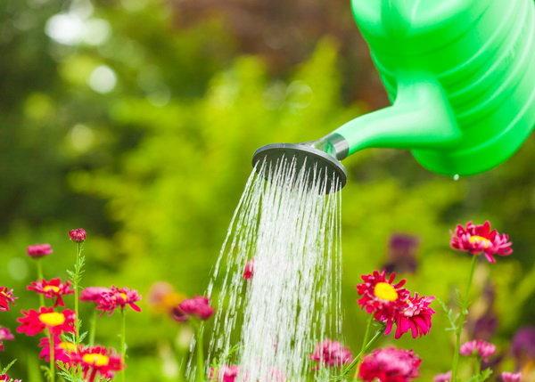 เคล็ดลับเนรมิตสวนสวยด้วยการดูแลอย่างถูกวิธี