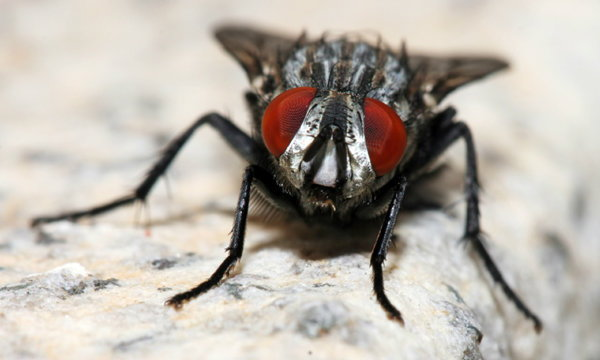 5 วิธีธรรมชาติไล่แมลงวันกวนใจ ไม่กล้ามาวุ่นวาย