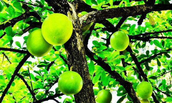 8 ต้นไม้ฟอร์มสวย มีต้นอะไรบ้าง เลือกจัดวางให้หน้าบ้านดูดี