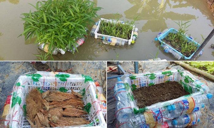ไอเดียปลูกผักบุ้งลอยน้ำ ปลูกไม่ต้องรดน้ำผักปลอดสารไว้กินในบ้าน