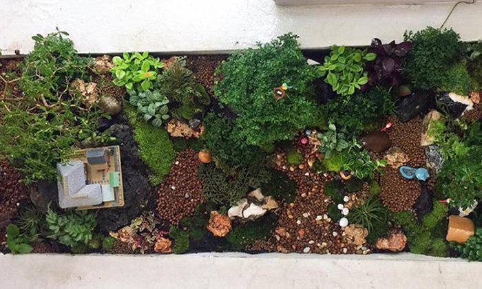 DIY Giant tray garden