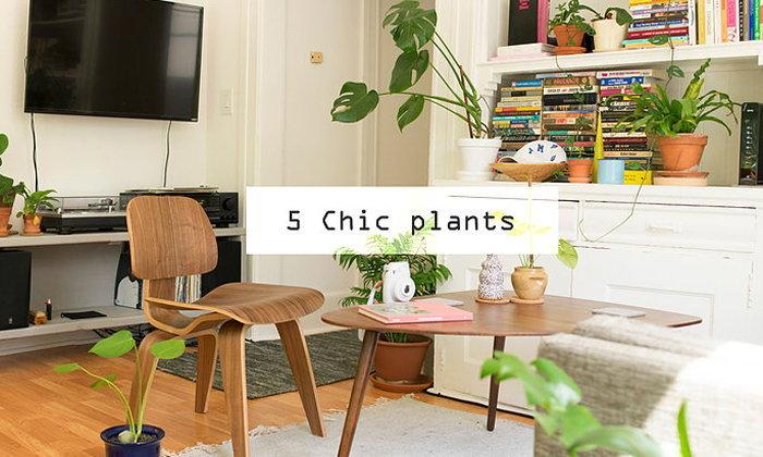 Chic plants 5 ต้นไม้สายชิค