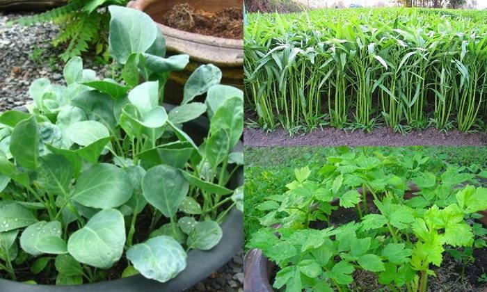 ไอเดียปลูกผักสวนครัวในบ้าน หมุนเวียนตามฤดูกาลต่างๆ ทำให้บ้านมีผักปลอดภัยกินตลอดทั้งปี