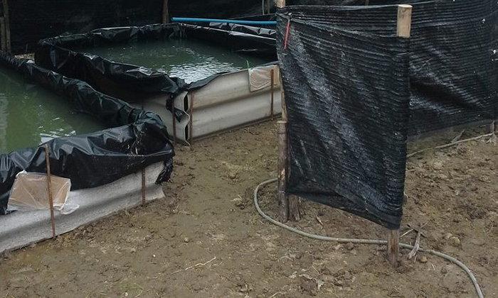 ไอเดียสร้างบ่อเลี้ยงปลาด้วยกระเบื้องเก่า พอเพียงในบ้านได้ง่ายๆ