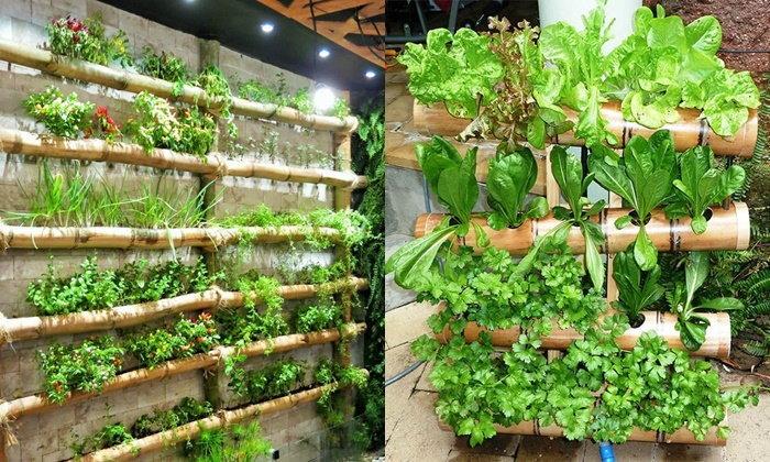 ไอเดียการปลูกผัก ด้วยกระบอกไม้ไผ่ วัสดุหาง่าย ได้ผักปลอดภัย