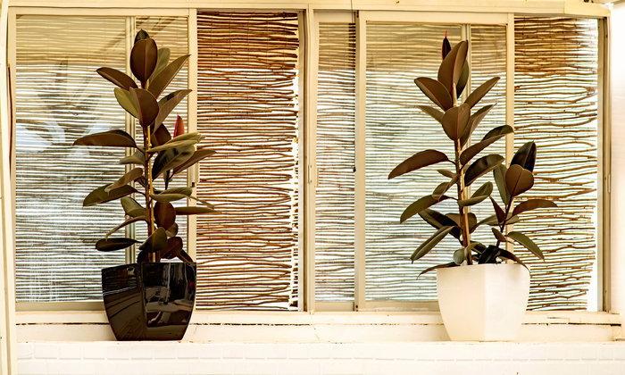 รวมมิตร 4 ไม้ประดับดูดสารพิษที่ควรปลูกติดบ้านไว้ฟอกอากาศ