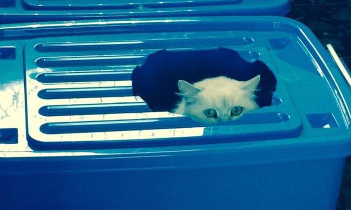 """DIY """"ห้องน้ำแมวทำเอง"""" ขั้นตอนสุดง่ายใช้แค่ลังพลาสติกสองใบ"""