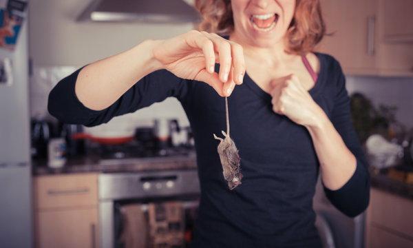 กำจัดสารพัดสัตว์รบกวนบ้าน แบบธรรมชาติ ไม่บาป
