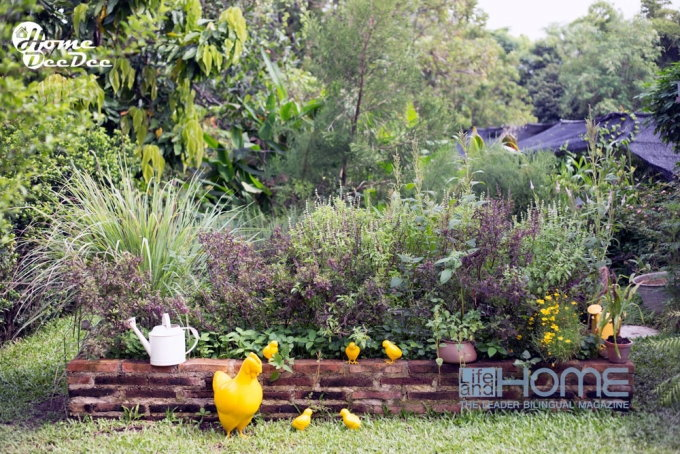 ตกแต่งสวนผักให้เป็นสวนสวยประจำบ้าน