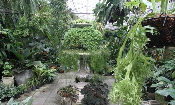 สวนเฟินในบ้าน ความงดงาม และร่มรื่นของสีเขียว