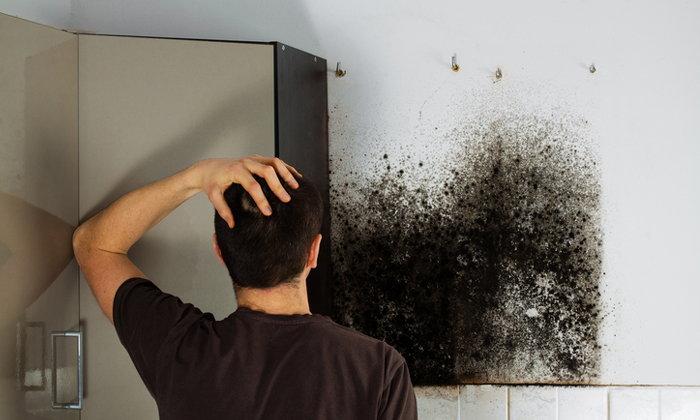 4 เทคนิคกำจัดกลิ่นเชื้อราออกจากบ้าน