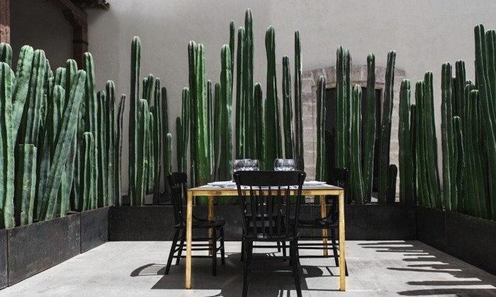 10 ต้นไม้บังสายตา สร้างพื้นที่ความเป็นส่วนตัวอย่างมีสไตล์