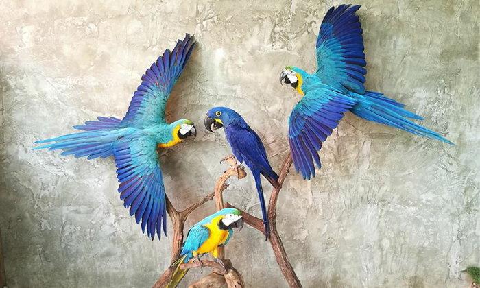 TaxiD de Art  'สัตว์สตาฟ' เพื่อการตกแต่ง เพิ่มเสน่ห์บ้านด้วยการปลุกชีวิตสัตว์ขึ้นมาอีกครั้ง