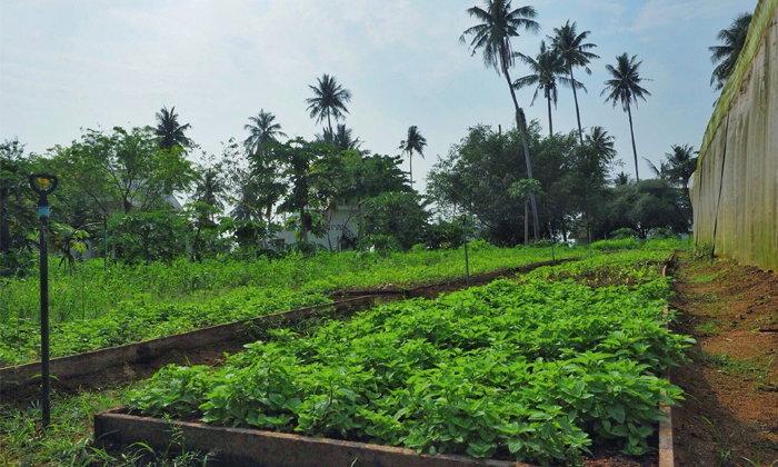 ฟื้นผืนดินบนเกาะหมากเป็น 'สวนเกษตรอินทรีย์' มีผักดีๆ กินใช้ ไม่ทำลายสิ่งแวดล้อม