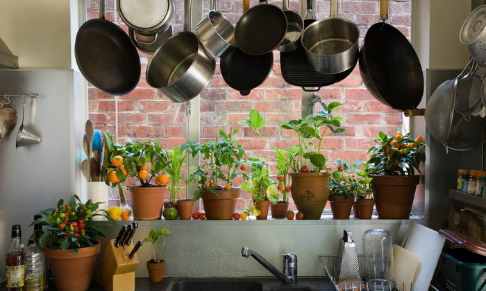 แนะนำ 4 ต้นไม้เหมาะสำหรับปลูกไว้ในห้องครัว โตได้ไม่กลัวความร้อน