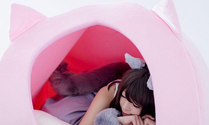 บ้านแมวสำหรับคนมาแล้วจ้า… น่านอนมากๆ ขอบอก!