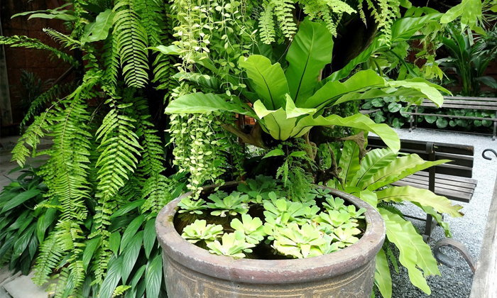 Tropical Garden จัดสวนรอบบ้านให้เหมาะกับภูมิอากาศร้อนชื้น