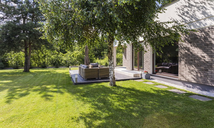 5 ต้นไม้ช่วยดักฝุ่น ปลูกไว้ใกล้บ้าน สบายกาย สบายใจ