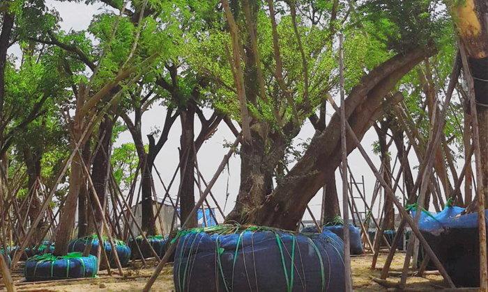 """แคมเปญ """"Forest Rescue"""" ช่วยชีวิตต้นไม้กว่า 500 ต้น  สร้างกำแพงธรรมชาติดักฝุ่น PM 2.5 มากถึง 700 กิโลกรัมต่อปี"""