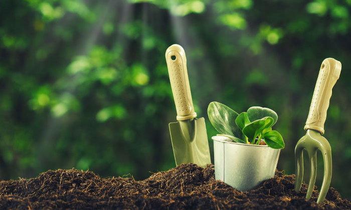 ไอเดียจัดสวนเองแบบประหยัดและง่ายดาย