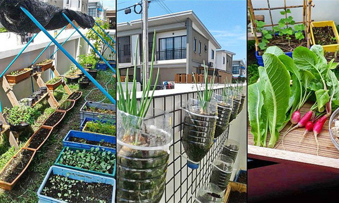 """รีวิว """"ทำสวนครัวแบบ DIY"""" ประหยัด ปลอดภัย พร้อมเพิ่มพื้นที่สีเขียวให้กับบ้าน"""