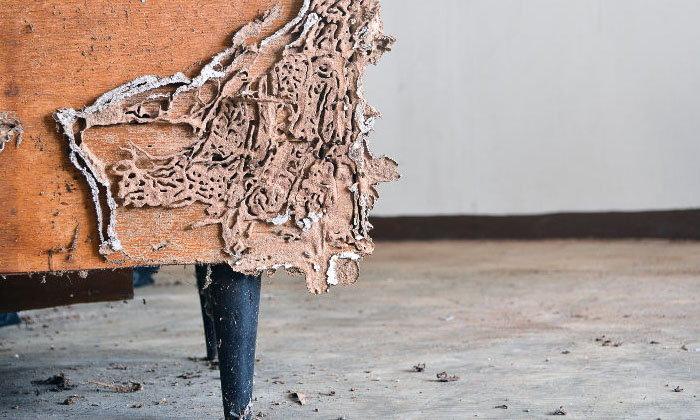 ตู้เสื้อผ้าไม้โดนปลวกแทะ ต้องทำอย่างไร