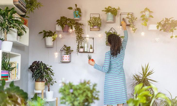 """6 วิธีประหยัดพื้นที่ หากคุณกำลังคิดจะเพิ่ม """"ต้นไม้"""" ในบ้าน"""