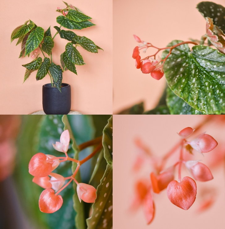 แนะนำ 4 พรรณไม้ ดอกสีชมพู สวย เพิ่มเสน่ห์ให้กับการจัดสวน