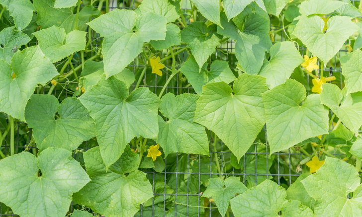 7 ผัก ผลไม้เติบโตได้ดี๊ดีในสวนแนวตั้ง ลูกดก ผลดีเหมือนเดิม