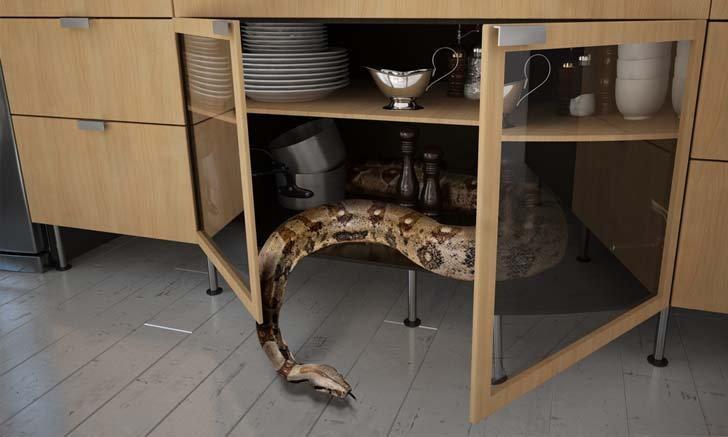 คำแนะนำจากหมายเลขฉุกเฉิน 199 เมื่องูเข้าบ้านควรทำอย่างไร ?