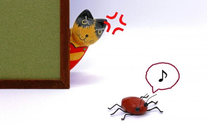 มาดูกันว่าแมลงสาบศัตรูตัวร้ายของคนญี่ปุ่นชอบและเกลียดอะไรบ้าง