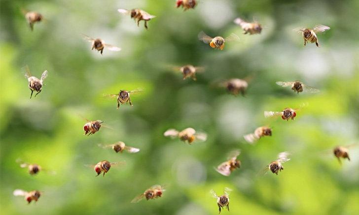 6 วิธีสุดว้าว กำจัดแมลงรบกวน เมื่อทำอาหารนอกบ้าน